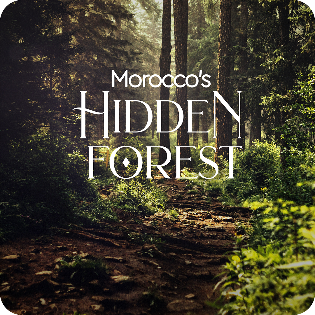 Moroco's Hidden Forest.png