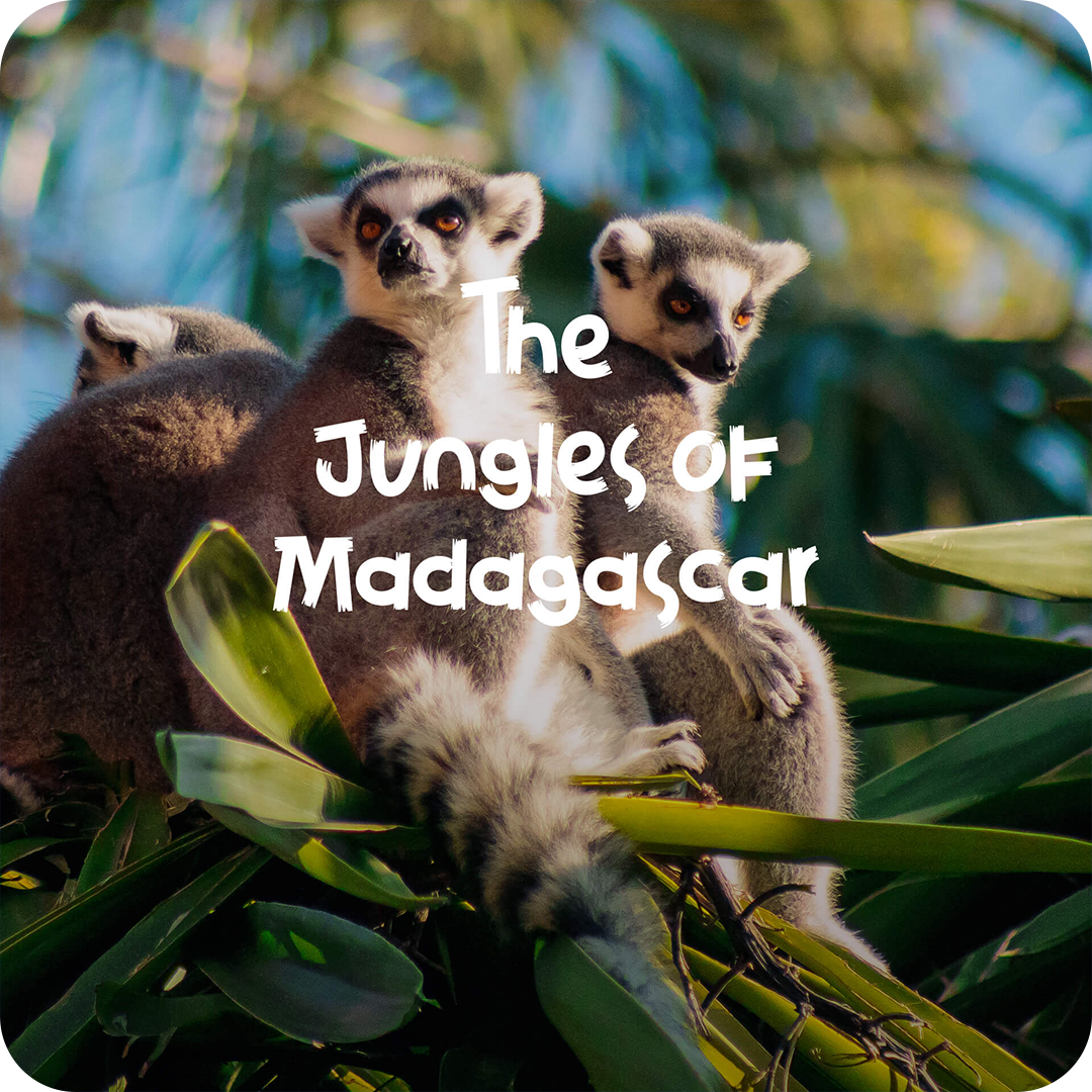 jungles_of_madagascar_cover.png