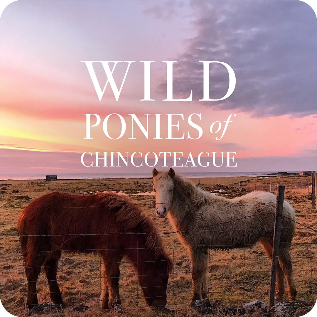 wild_ponies_chincoteague_cover.png