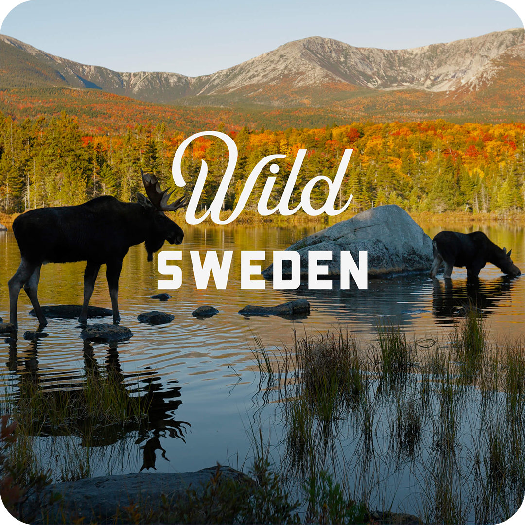 wild_sweden_cover.png