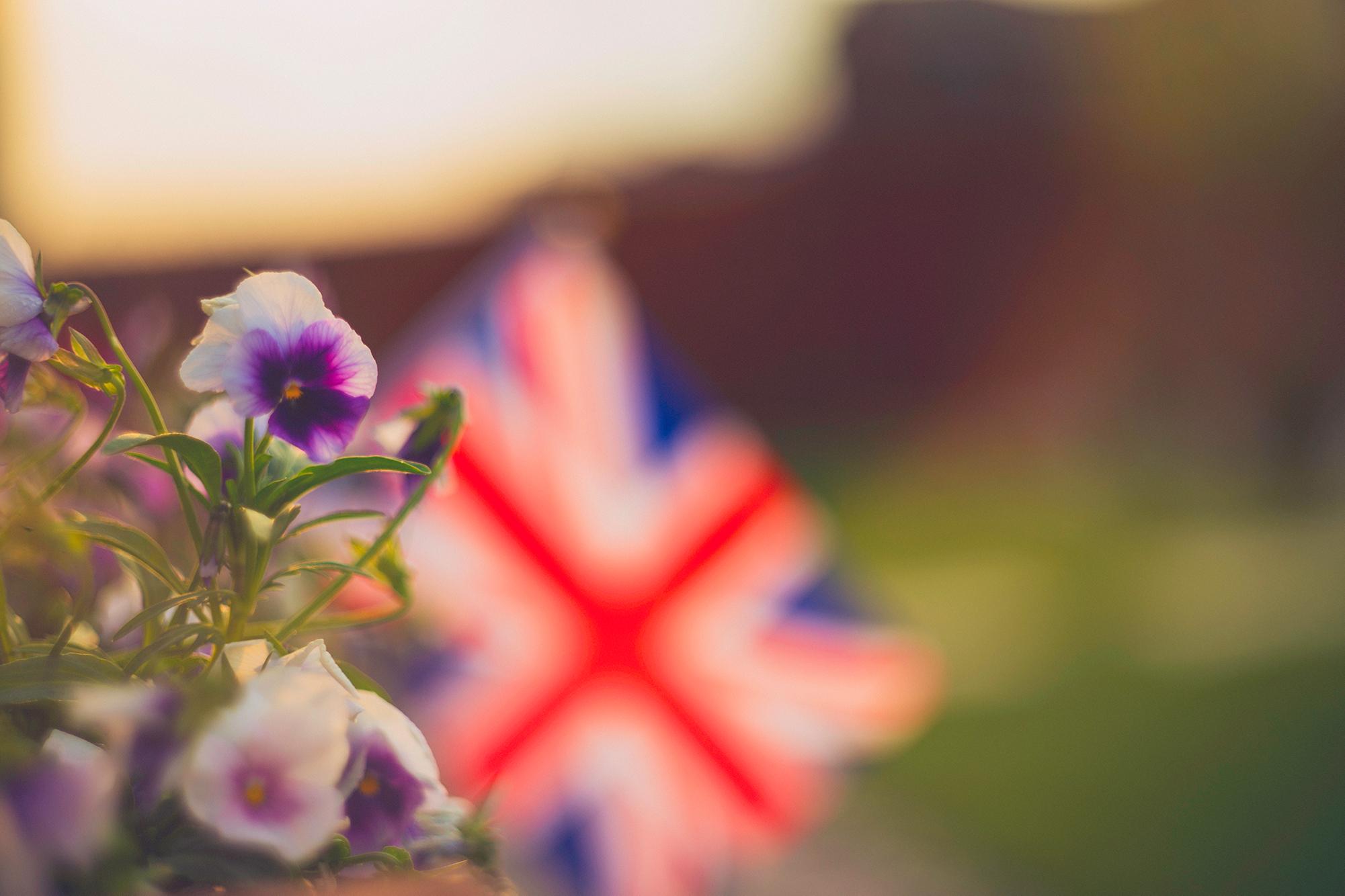 UK Flag Flowers iStock-844285220.jpg
