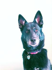 Our dog Dasha