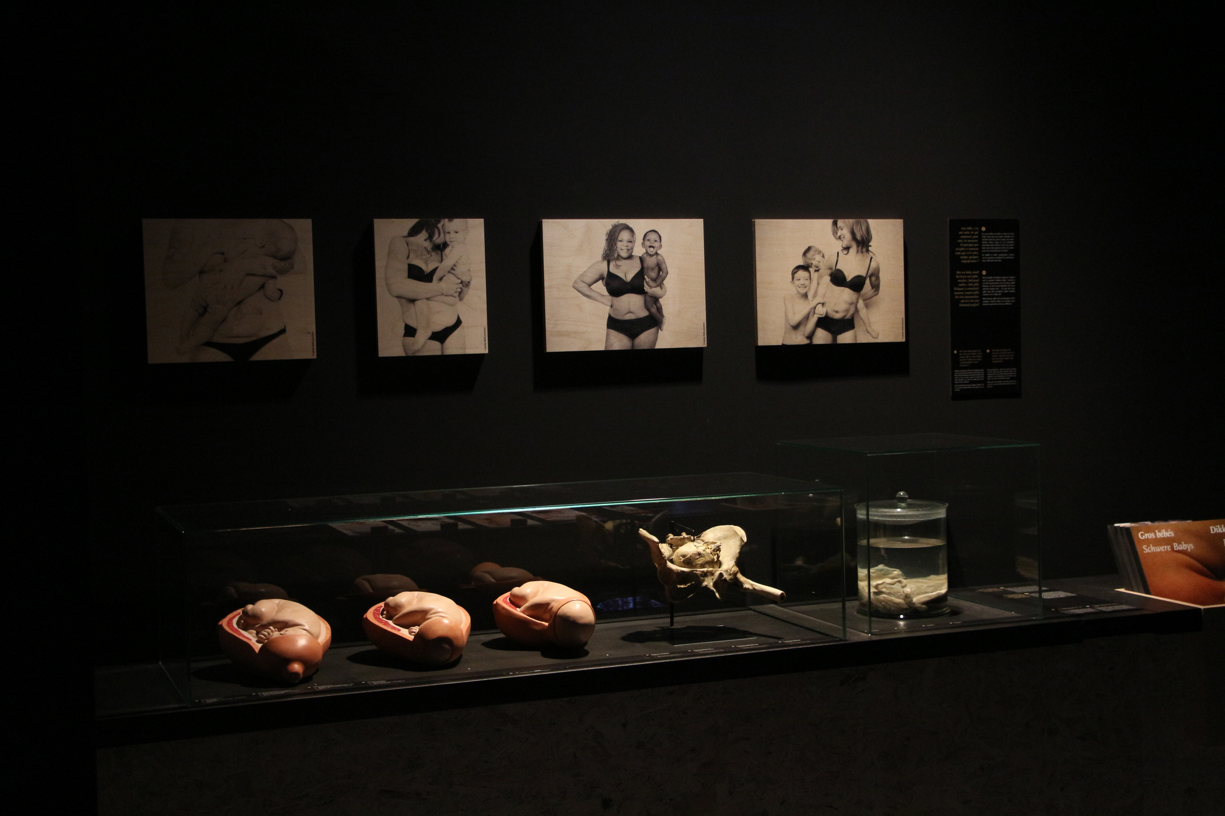 Photographs on permanent exhibit at the  Royal Belgian Institute of Natural Sciences.