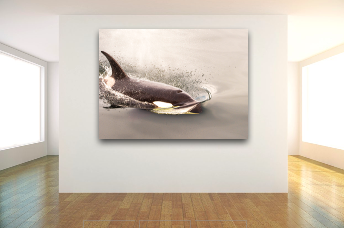Orca Photograph taken in Southeast Alaska