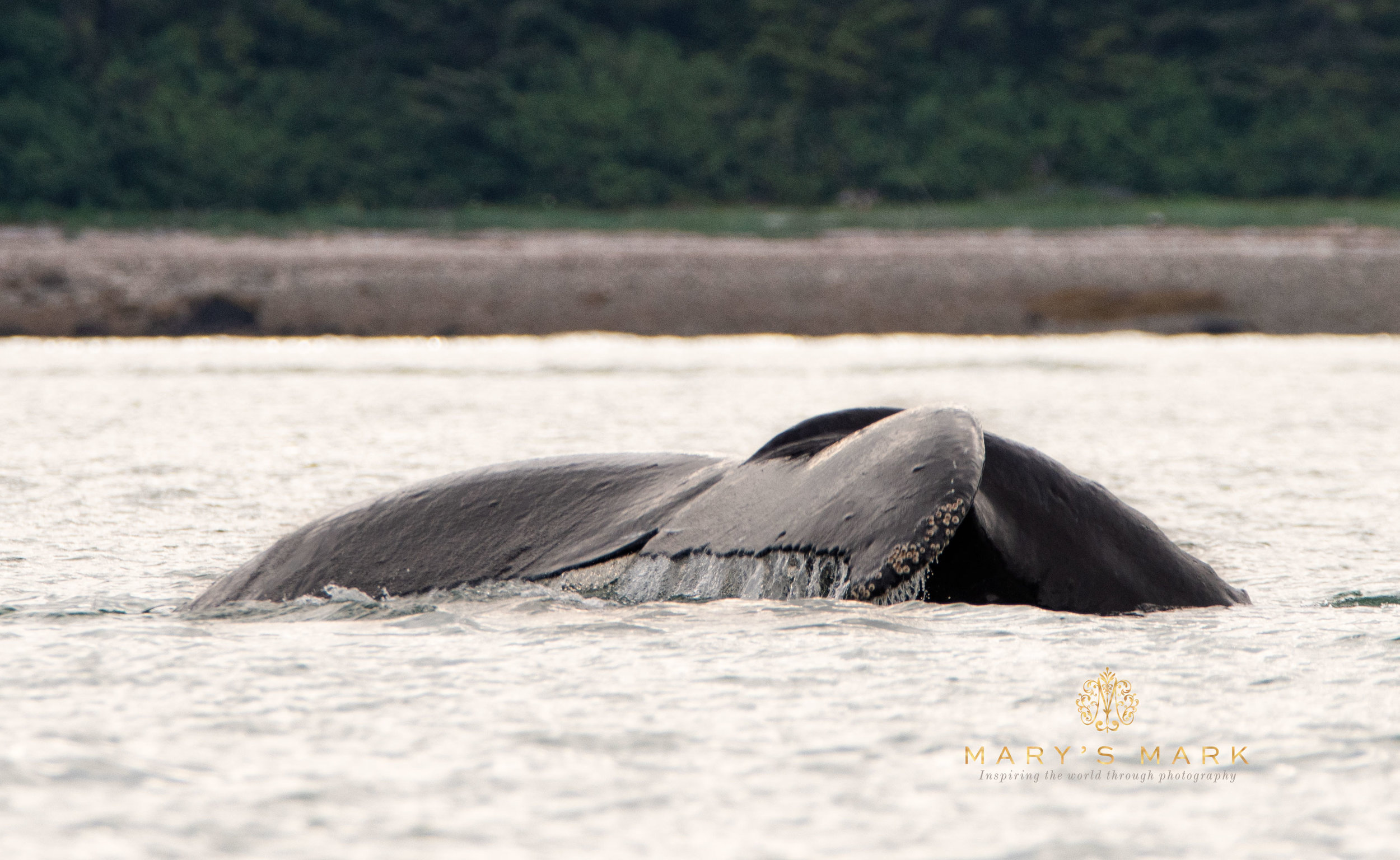 Carrying a DSLR While Traveling Can Be Incredibly Rewarding | Whale Fluke by Mary Parkhill