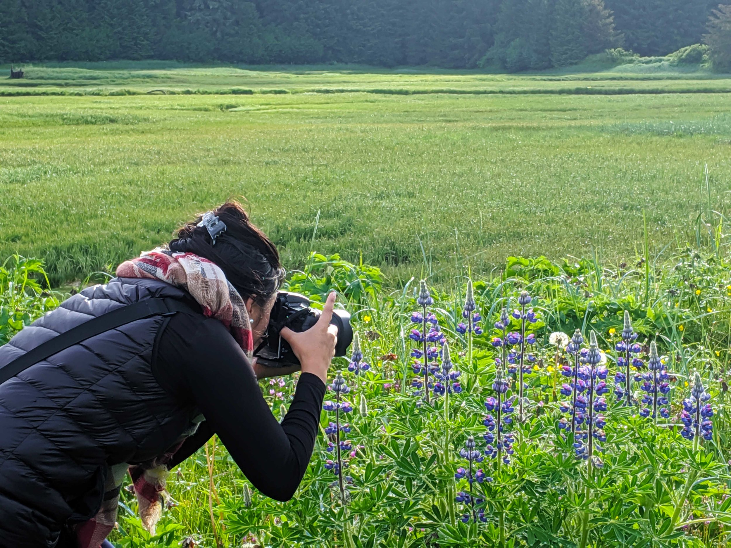 landscape photographer taking photographs of flowers Juneau alaska