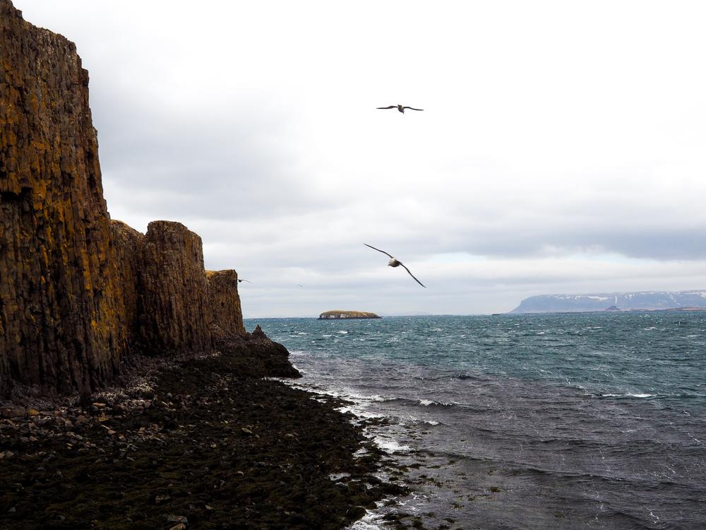2016-iceland-seagulls-paradise06.jpg