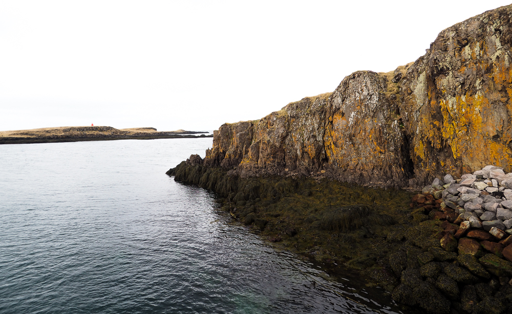 2016-iceland-seagulls-paradise07.jpg