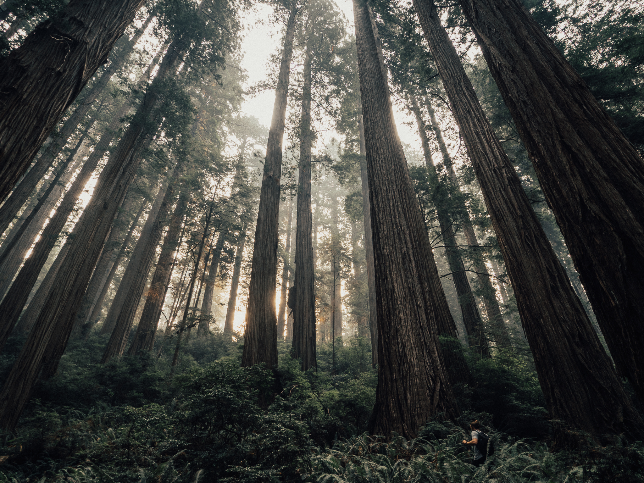 2017_JAMES_Oregon_03_PRINT_REVIEW_02[1].jpg