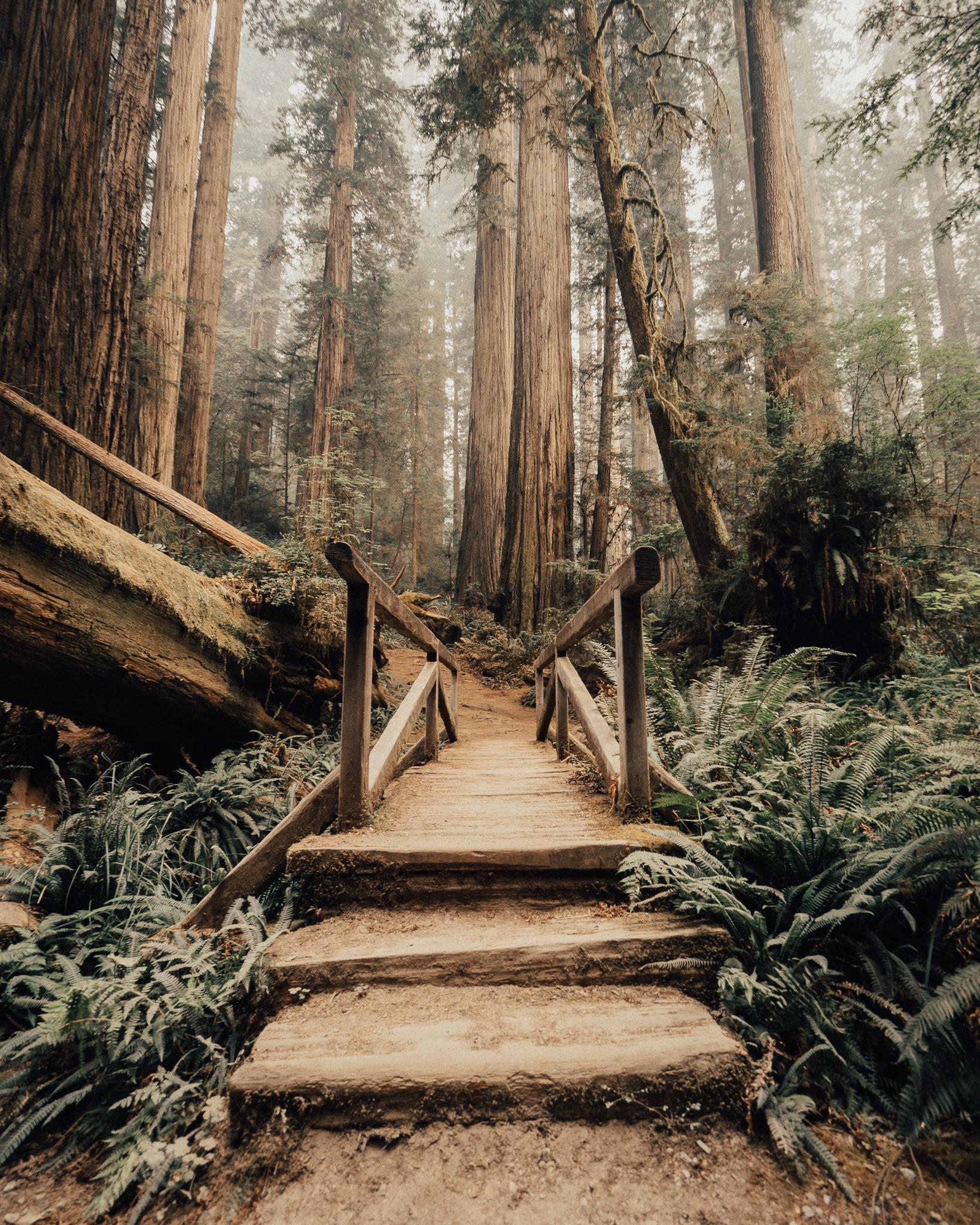 2017_JAMES_Oregon_03_02.jpg
