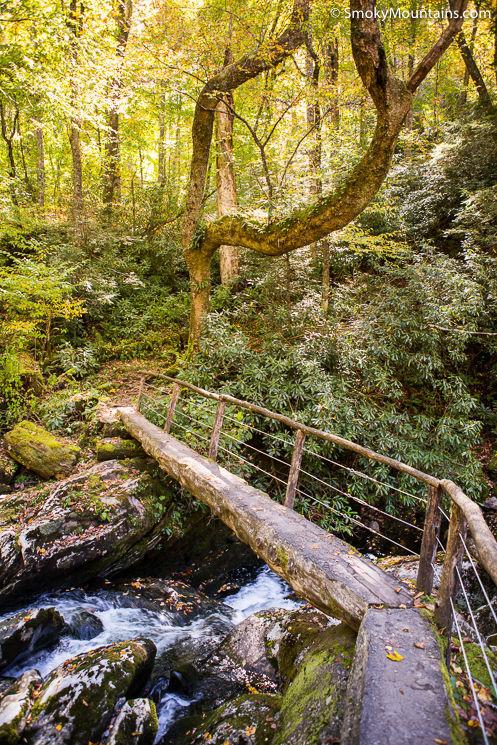 Photo source:  Smoky Mountains
