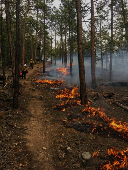 Crews keep an eye on low-level flames burning through duff on the Pacheco Canyon prescribed burn, part of the Greater Santa Fe Fireshed project area. USDA Forest Service photo by Jon Boe.