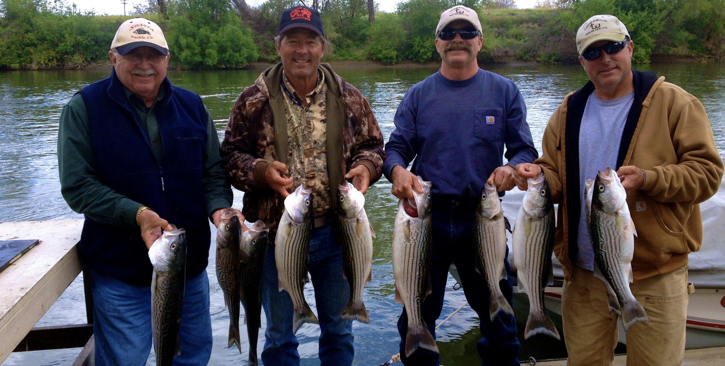 Sacramento River Striped bass!!