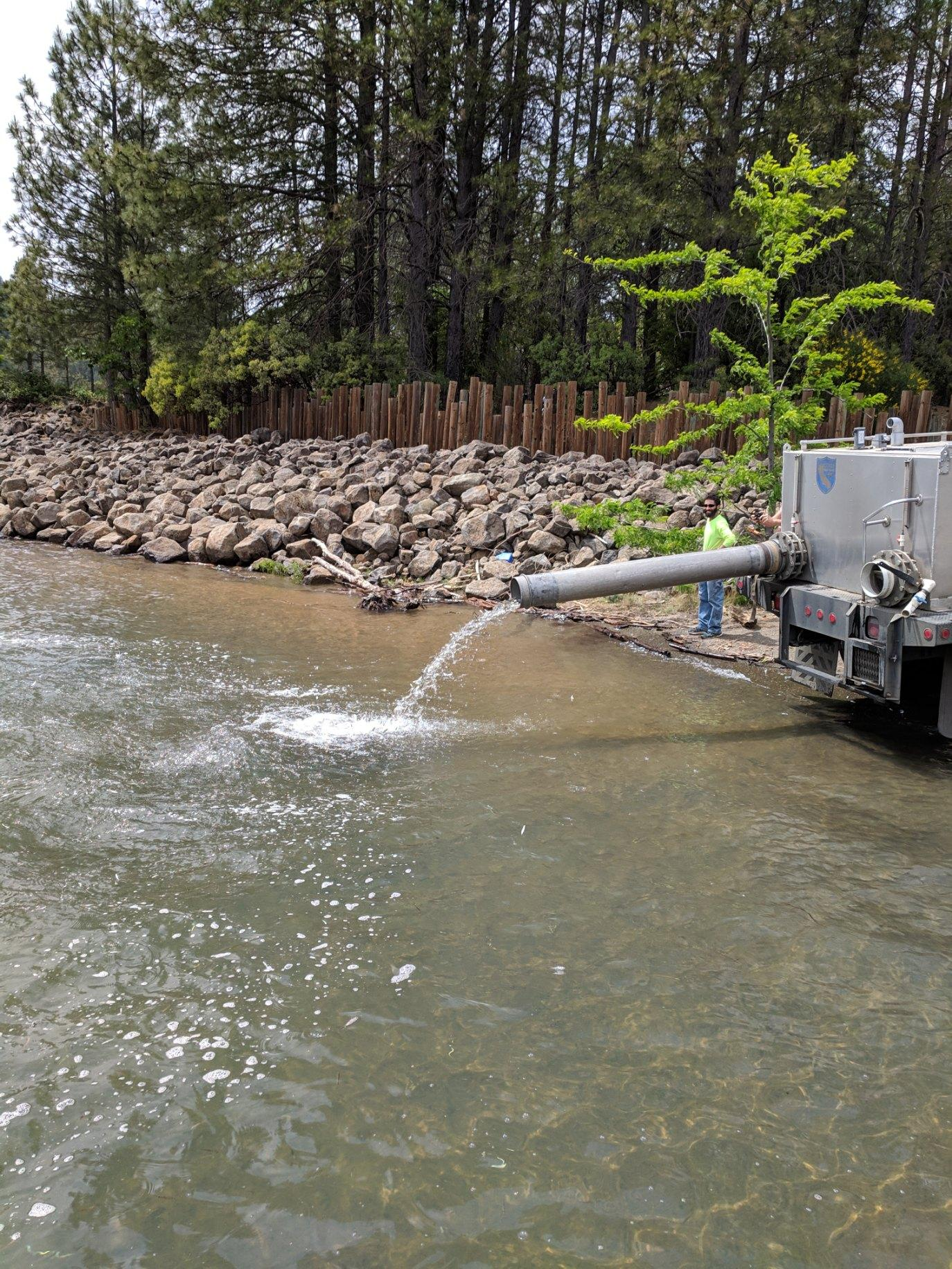 5/13/2019 87,000 Kokanee salmon being planted in Shasta Lake!
