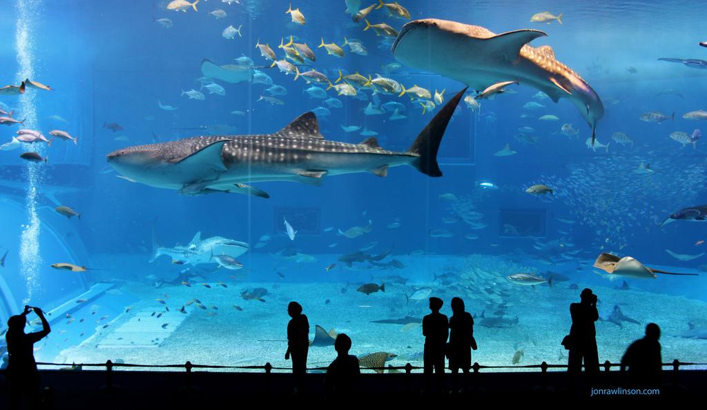 Vancouver Aquarium -