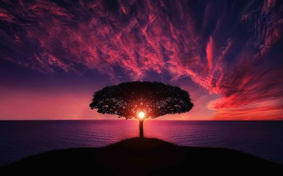 amazing-animal-beautiful-beautiful - tree.jpg