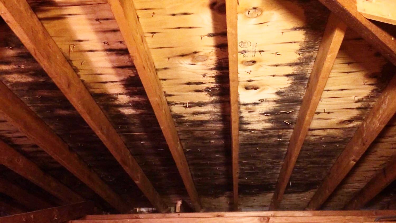 Mold on roof sheathing