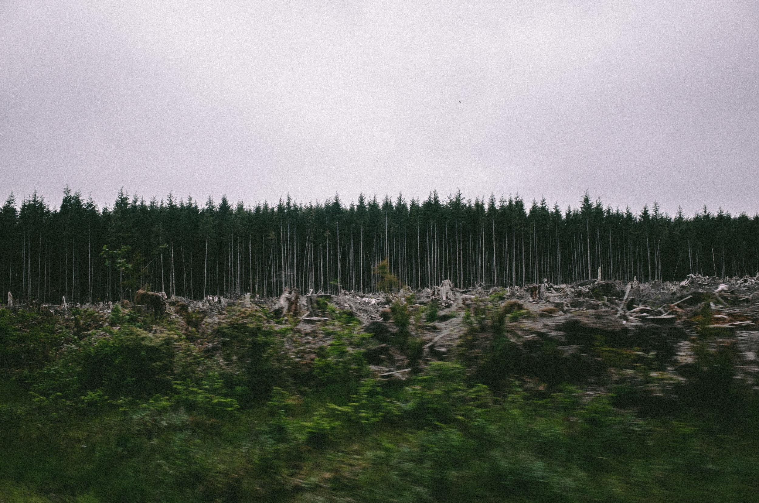 Roadtrip_KaveerRai_17.jpg