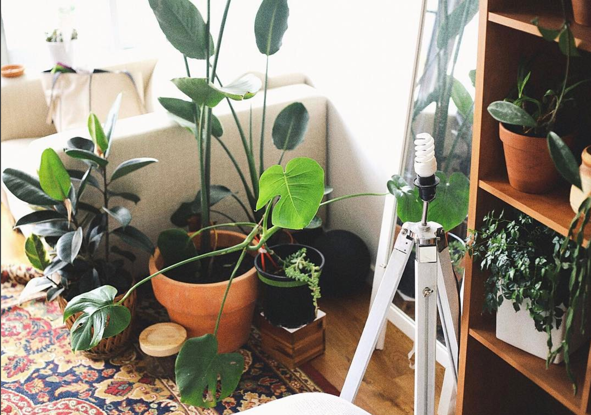PLANT MAMA CTF CURATED MELBOURNE