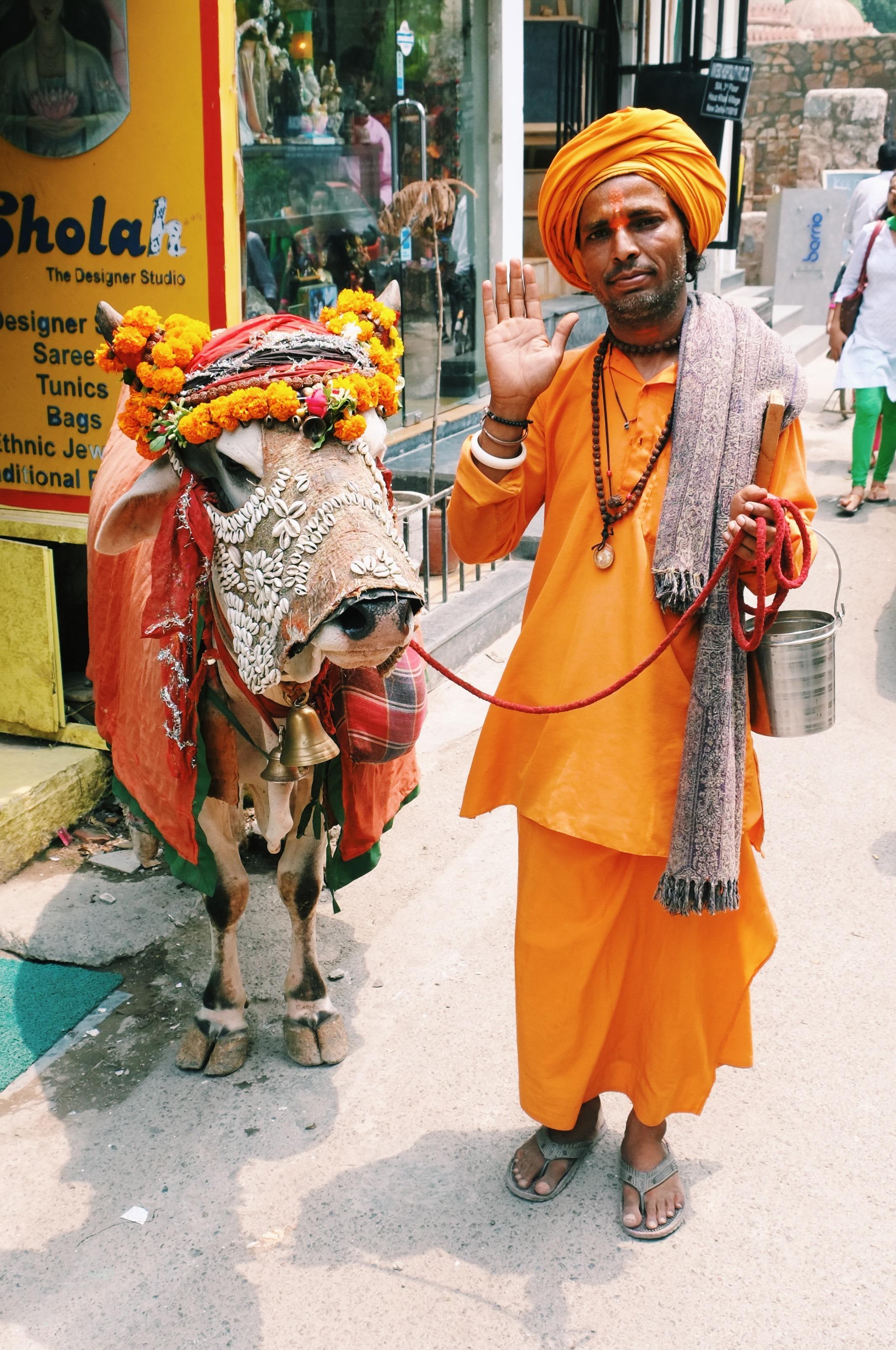 Holy Cow India Joost Bastmeijer.jpeg