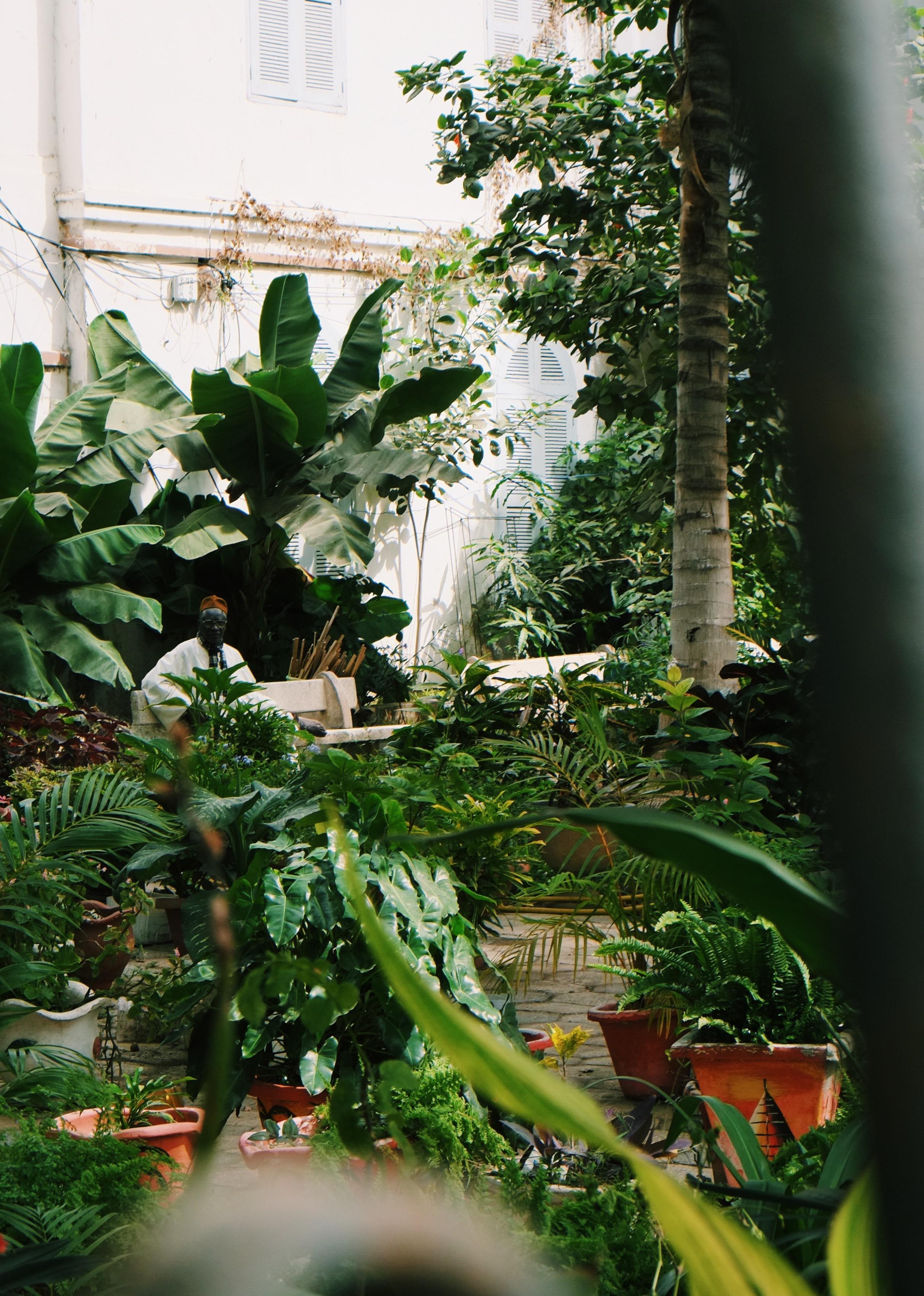 Saint-Louis garden in Senegal by Joost Bastmeijer.jpeg