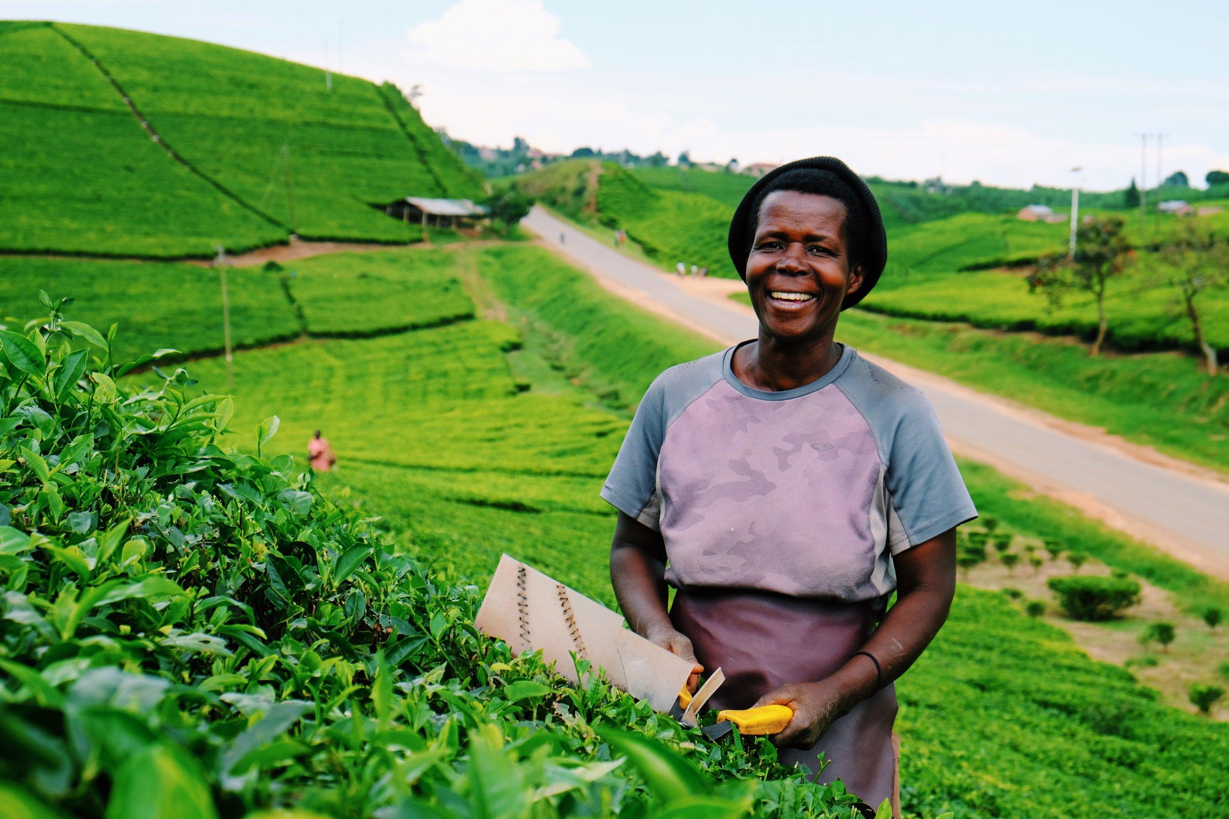 Tea plucker Uganda by Joost Bastmeijer.JPG