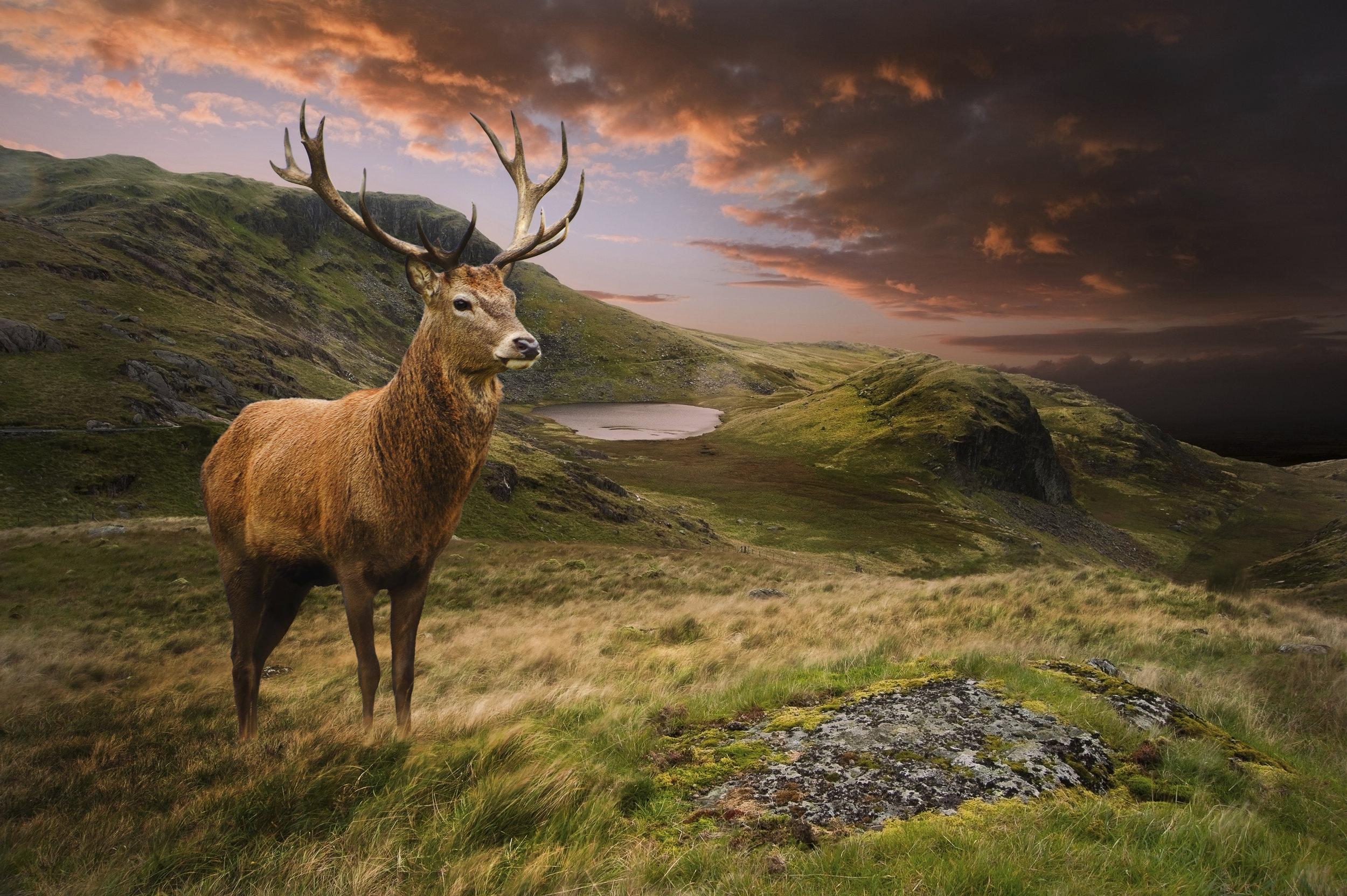 Deer Stalking Scotland