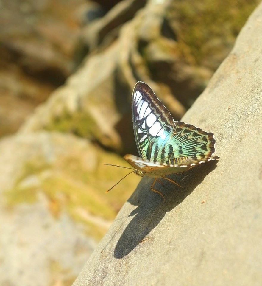 Butterfly In Nature.jpg