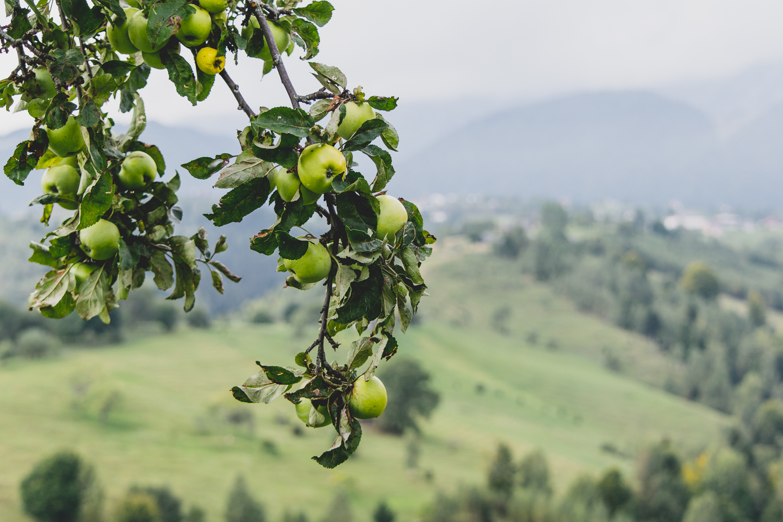 Organic Food From Transylvania.jpg