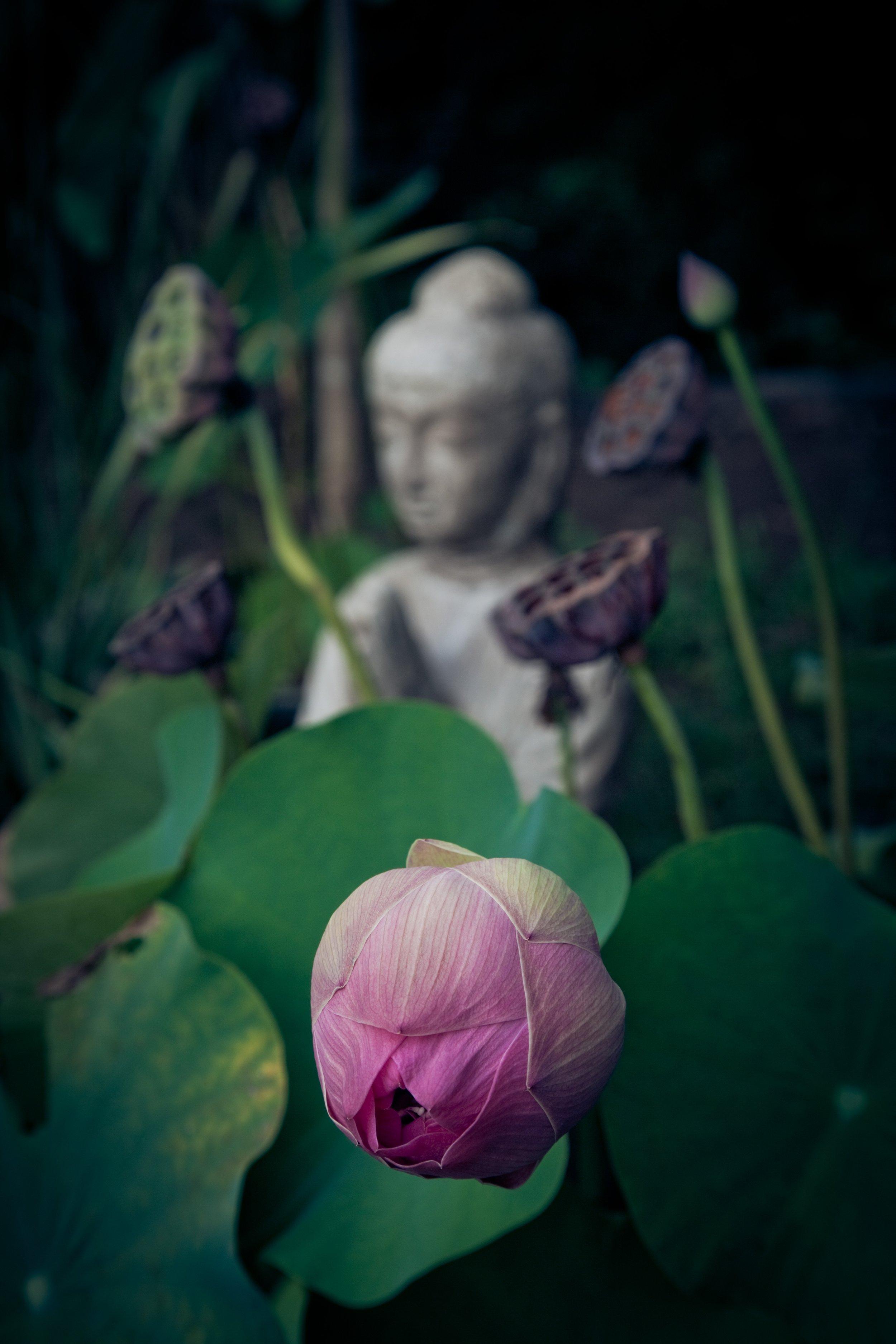 Zen Buddha Statue In Nature