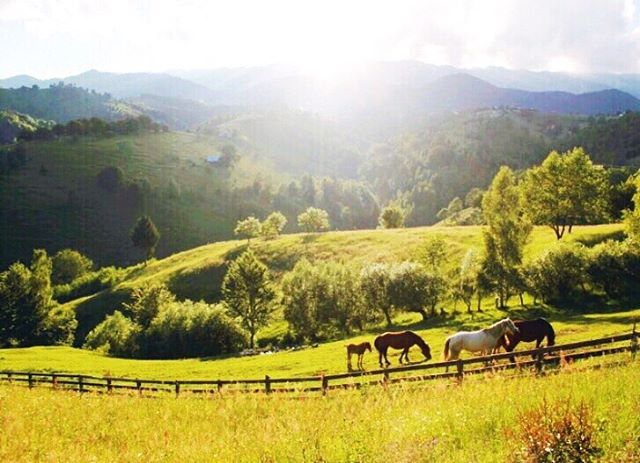 Summer is here in #Transylvania! Don't miss out on views like these, daily yoga on the deck, organic vegan food & true relaxation. We've still got a couple of spaces left #lastminute book on the link in bio 👆
