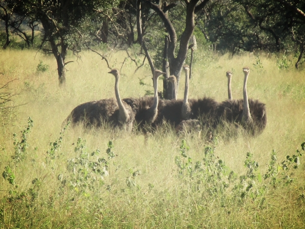 Michael kept a running tally of the animals we sighted and there were many! His favorites were the Ostriches and the Impala. Maybe we aren't Big 5 people.