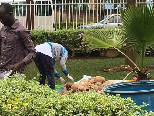 An unnerving sight - the cleaning of remains at the Nyamata Genocide Memorial.