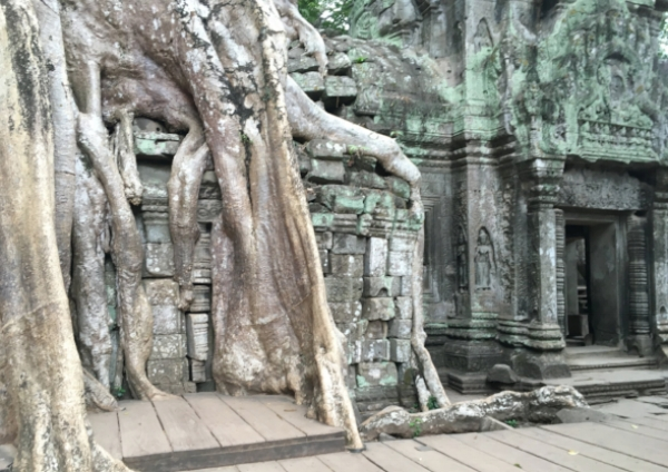 The temples of Ta Prom are still in the clutches of the jungle where they were discovered.