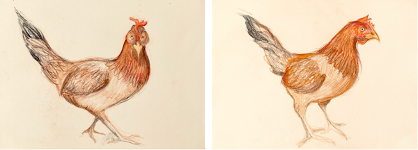 However, I was proud of my colored pencil sketches of our host's friendly chicken named Henny Penny