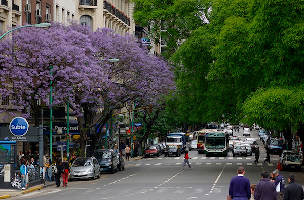 A typical Buenos Aires Street lined with beautiful trees. The downside is the sidewalks can be treacherous because the tree roots push the paving tiles into uneven and broken patches.