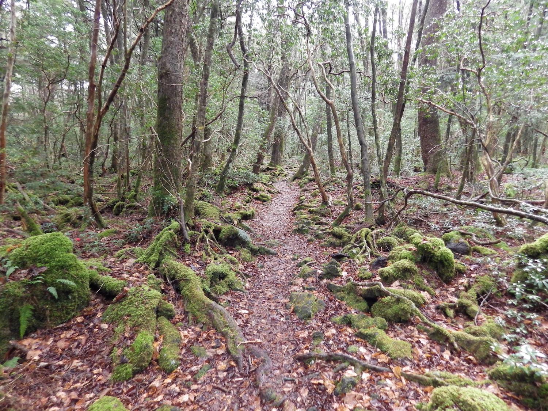 Jukai-Nature-Trail.jpg