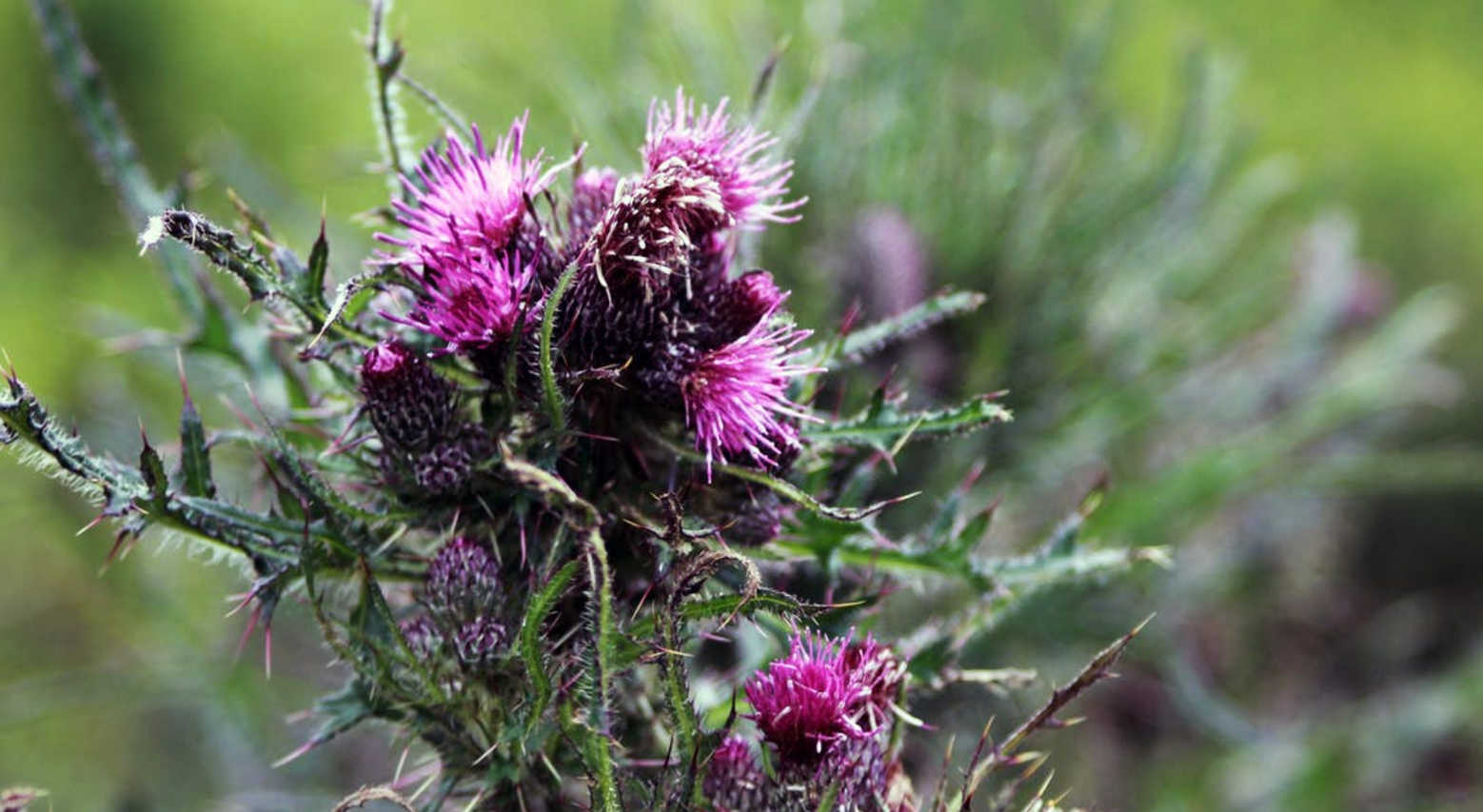 Your liver + milk thistle = so fresh and so clean, clean.