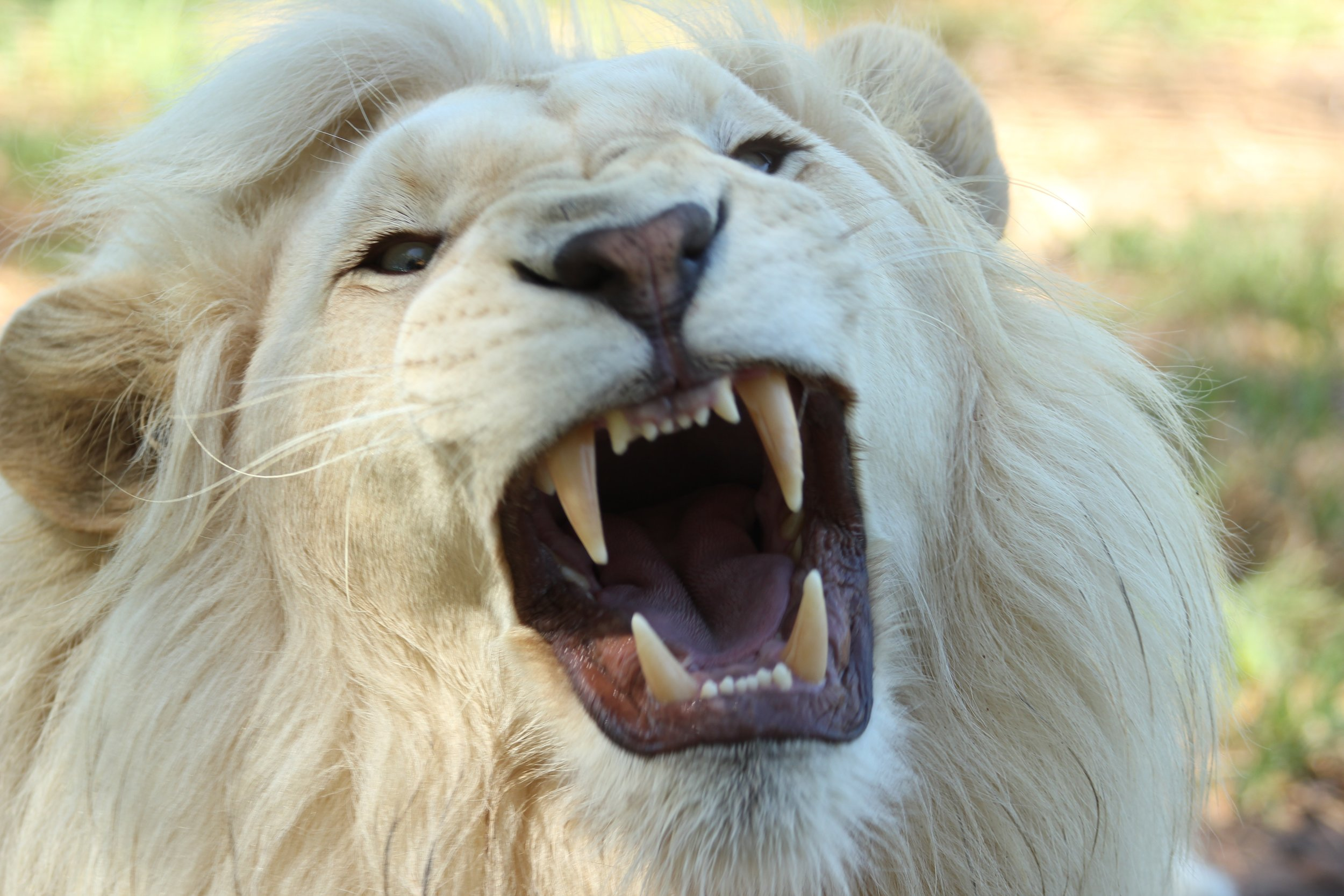 Animal mouths are just sooooo much cuter.