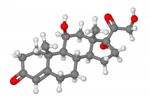 """Cortisol... - known for its involvement in the """"fight-or-flight"""" response"""