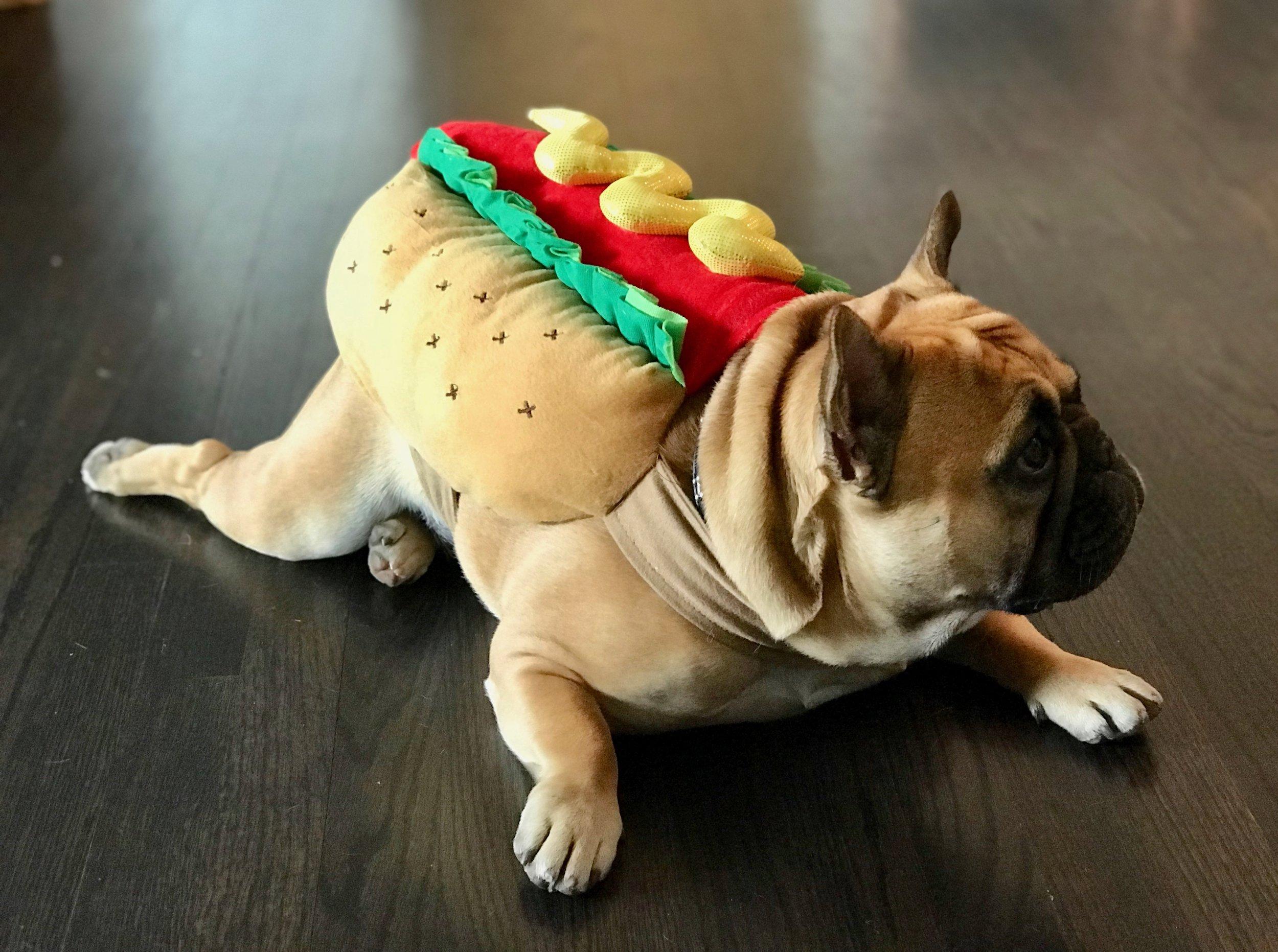 halloween hotdog profile.jpeg