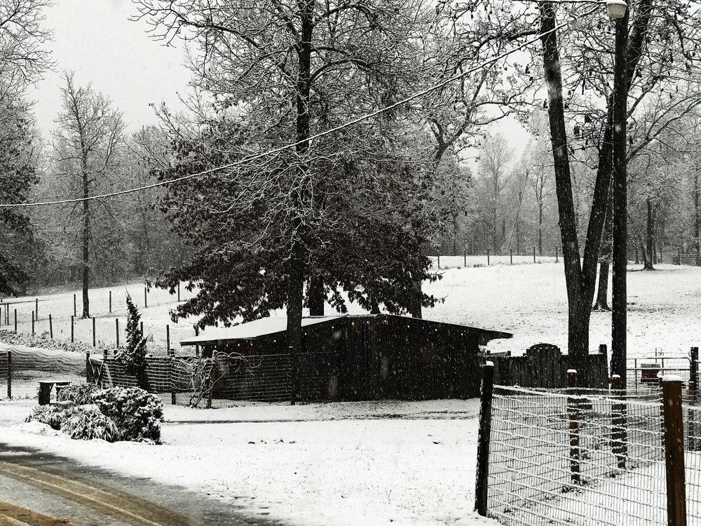 SHF+snow+photo+1.jpg