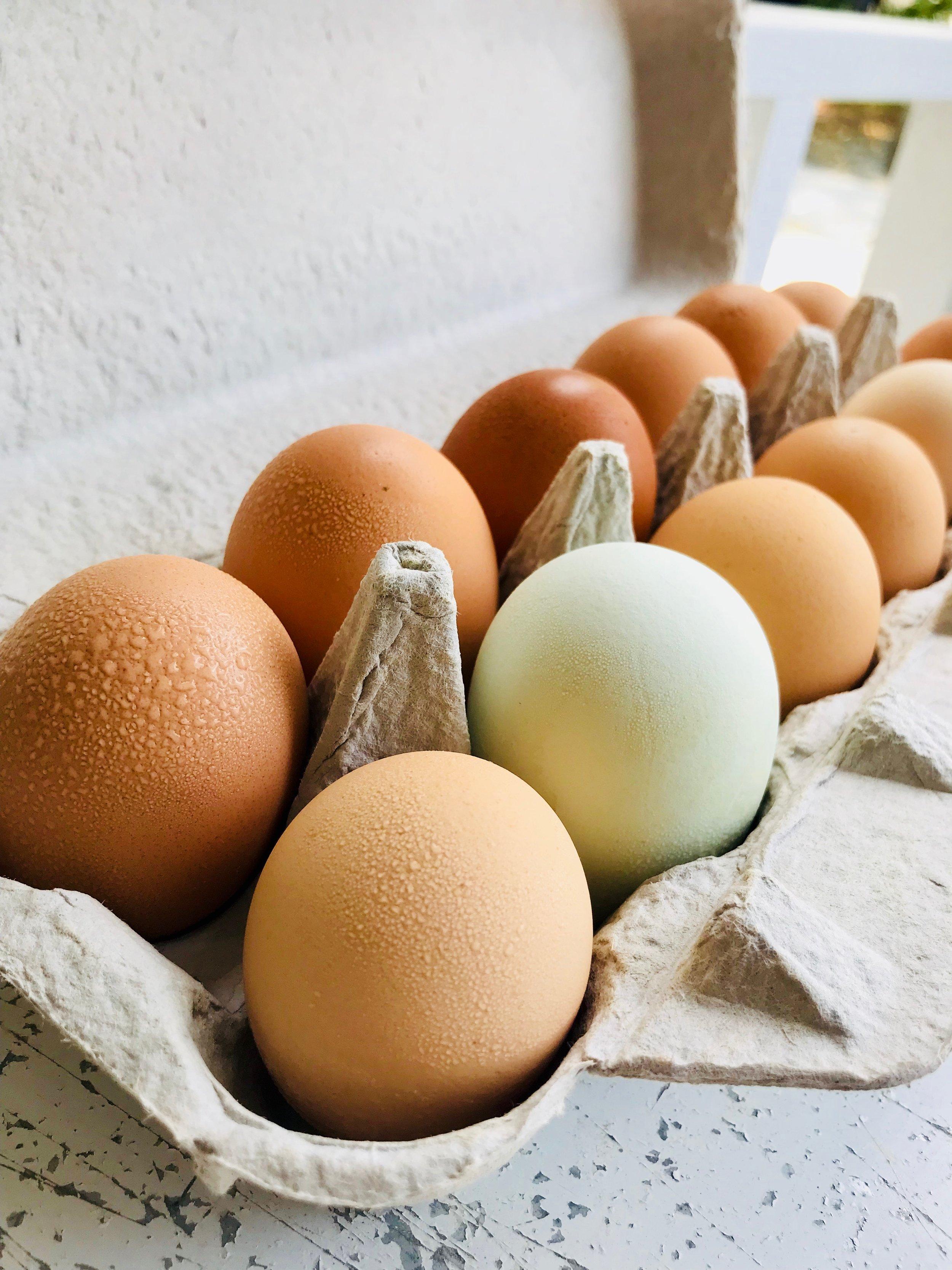 Farm Eggs /  Stone Hollow Farmstead