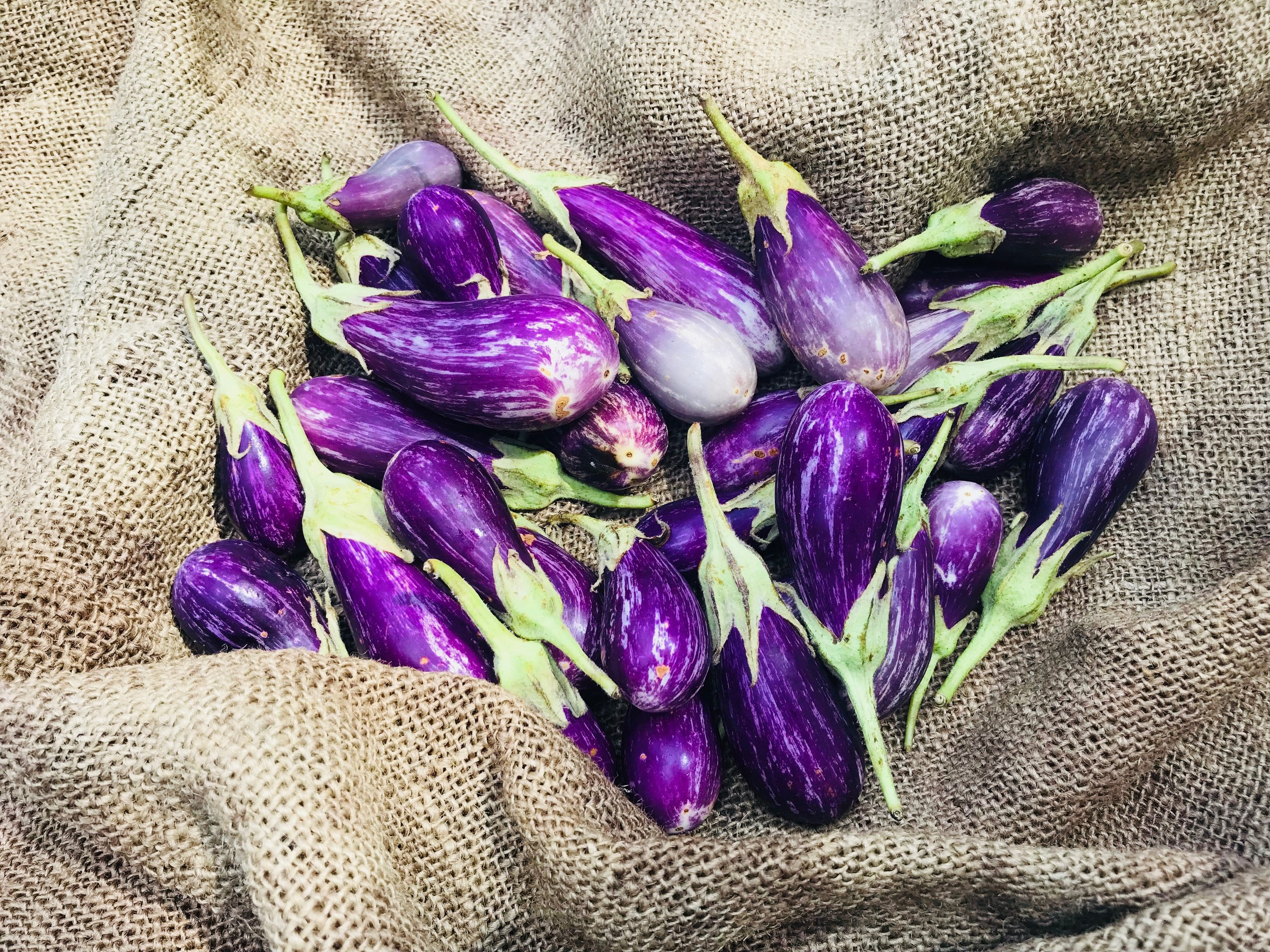 Fairytale Eggplant /  Belle Meadow Farms