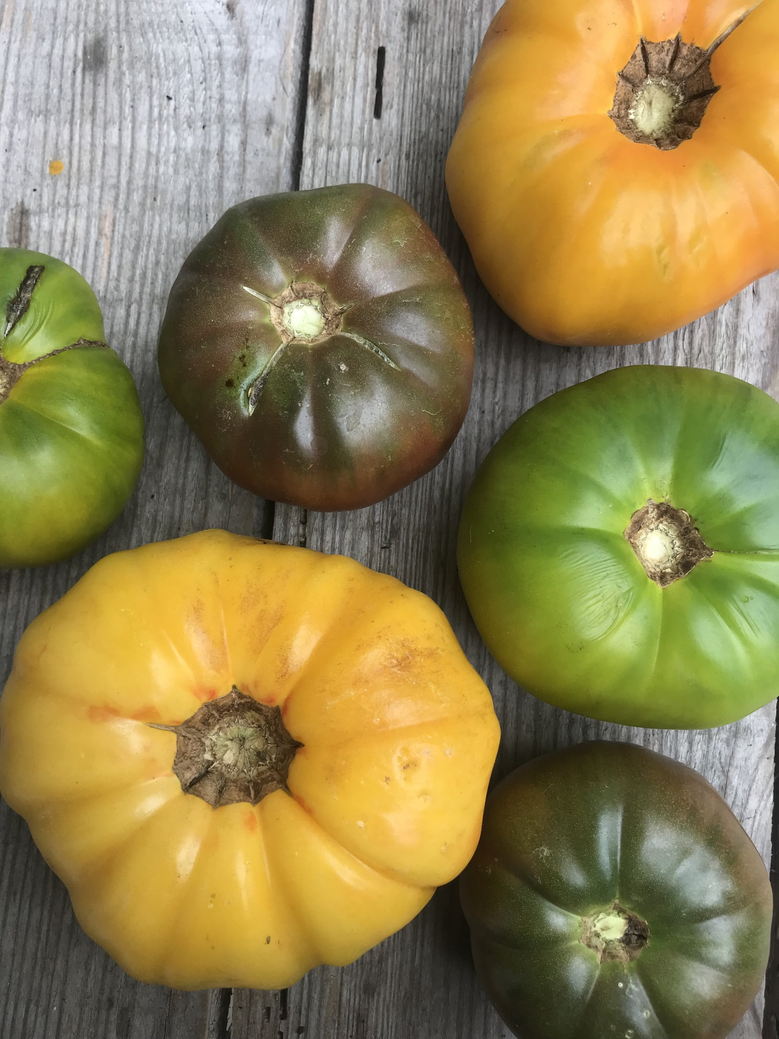 Tomatoes /  Jerry Gladden