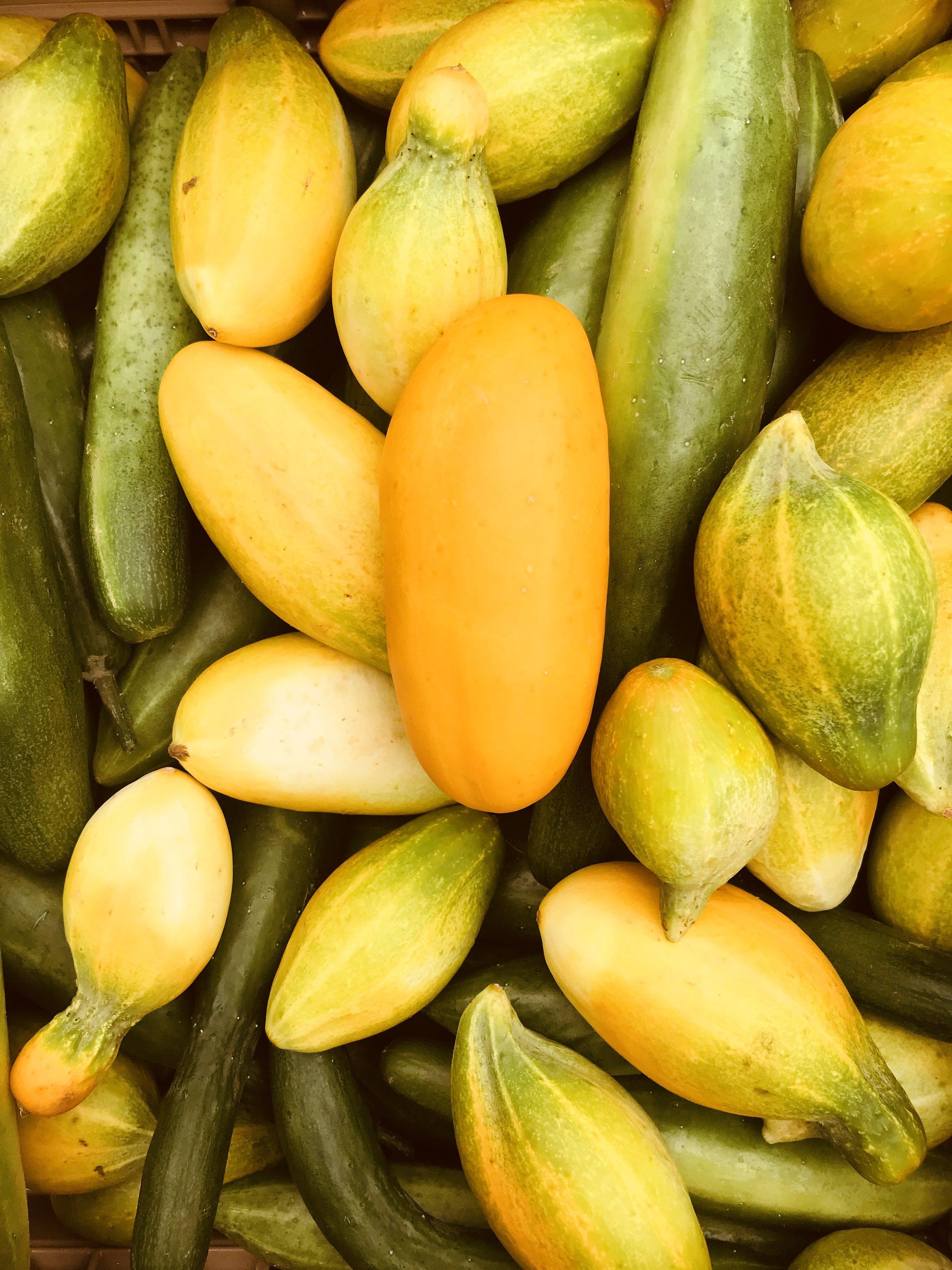 Pickling & English Cucumbers /  Stone Hollow Farmstead