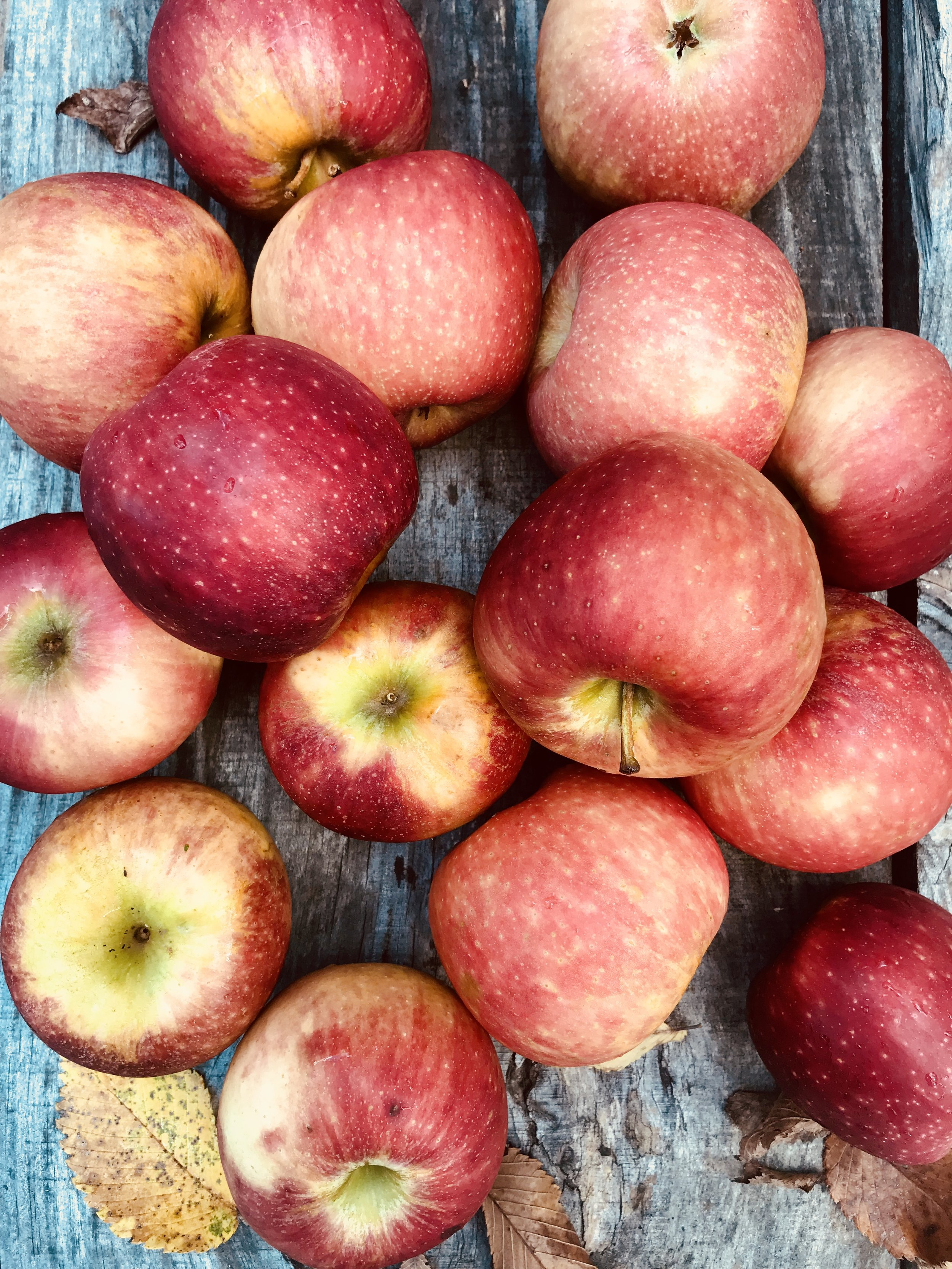 Apples /  Mountain View Orchards