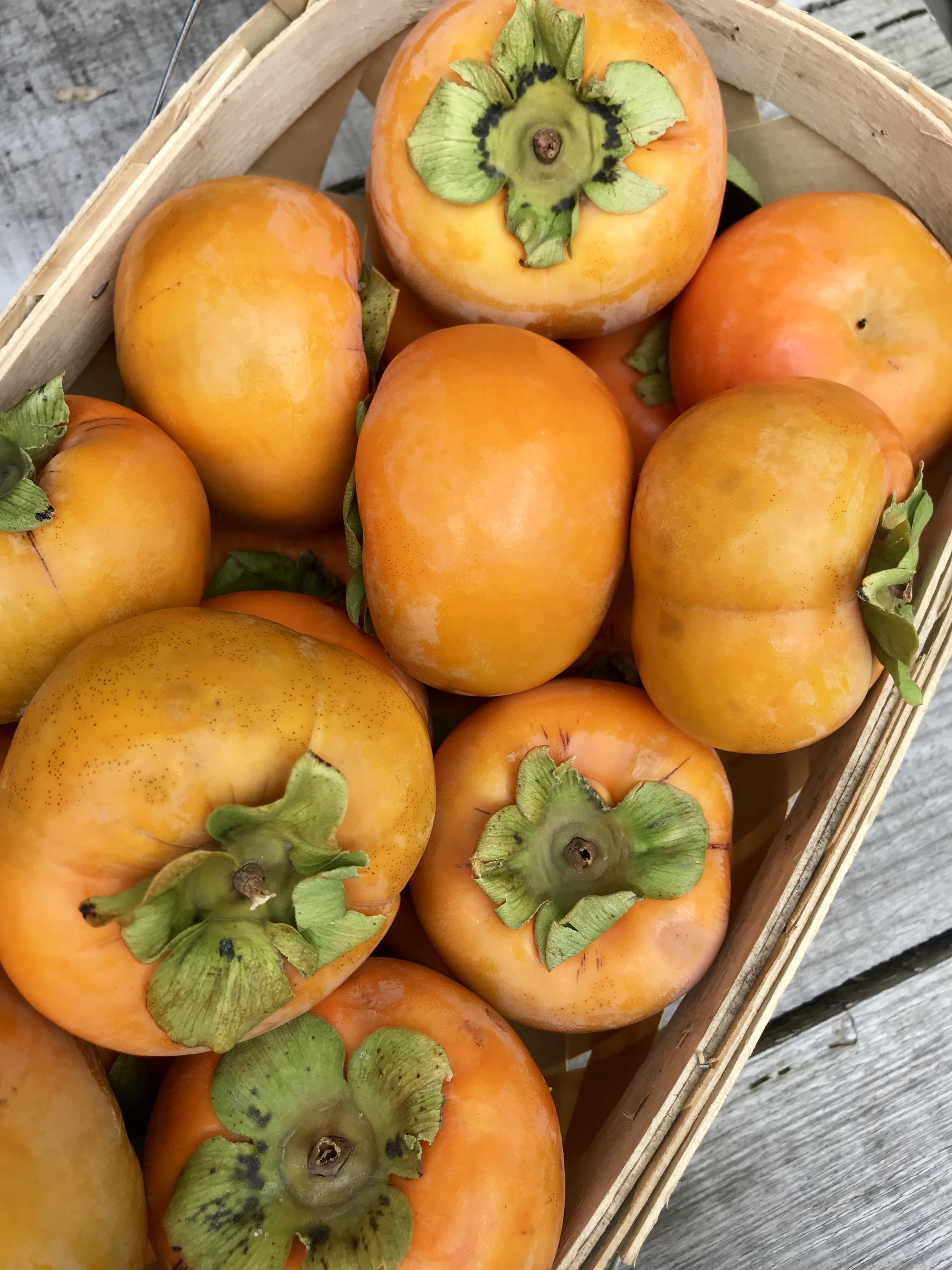 Persimmons /  Mountain View Orchards