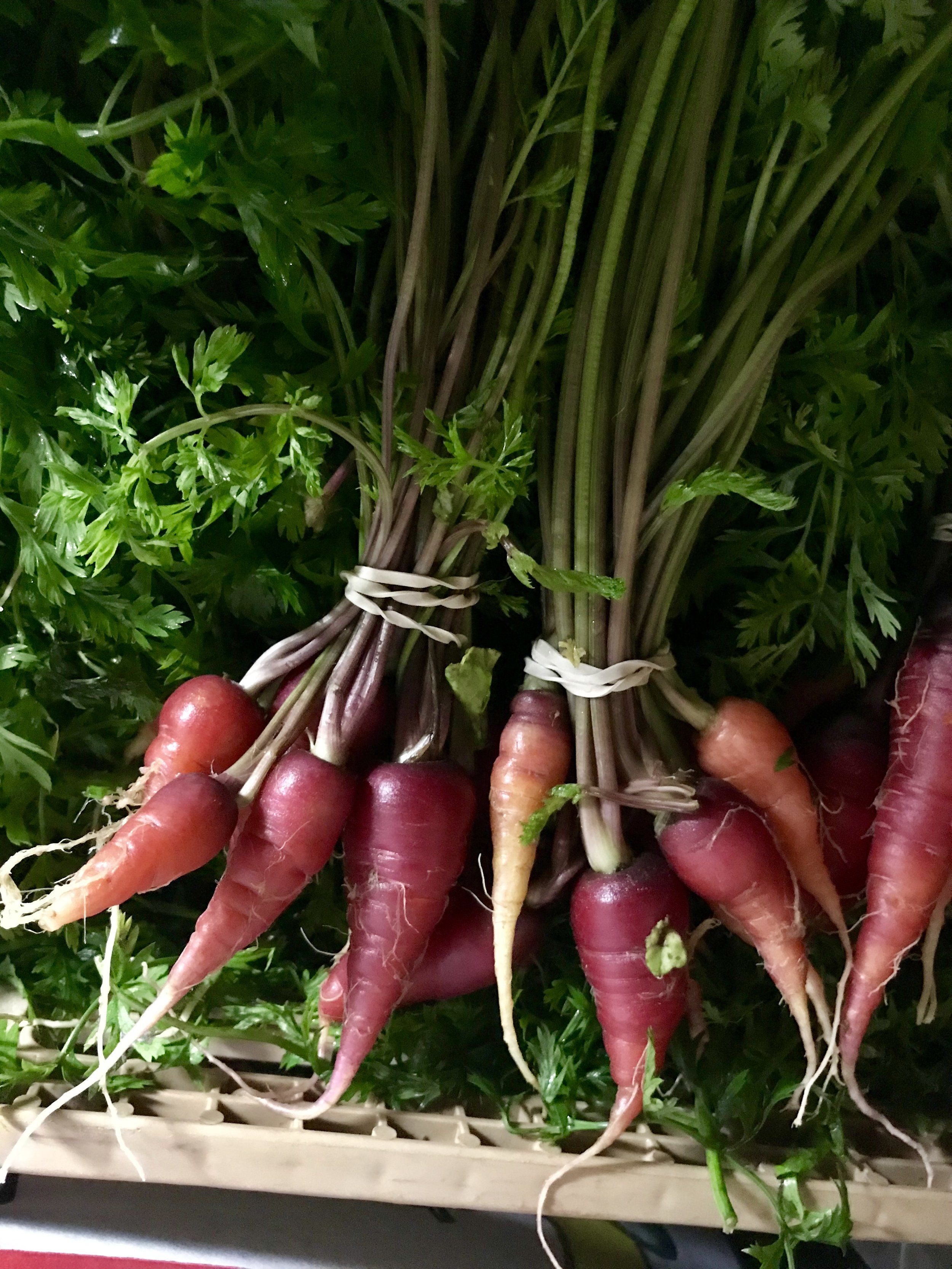 Carrots /  Stone Hollow Farmstead