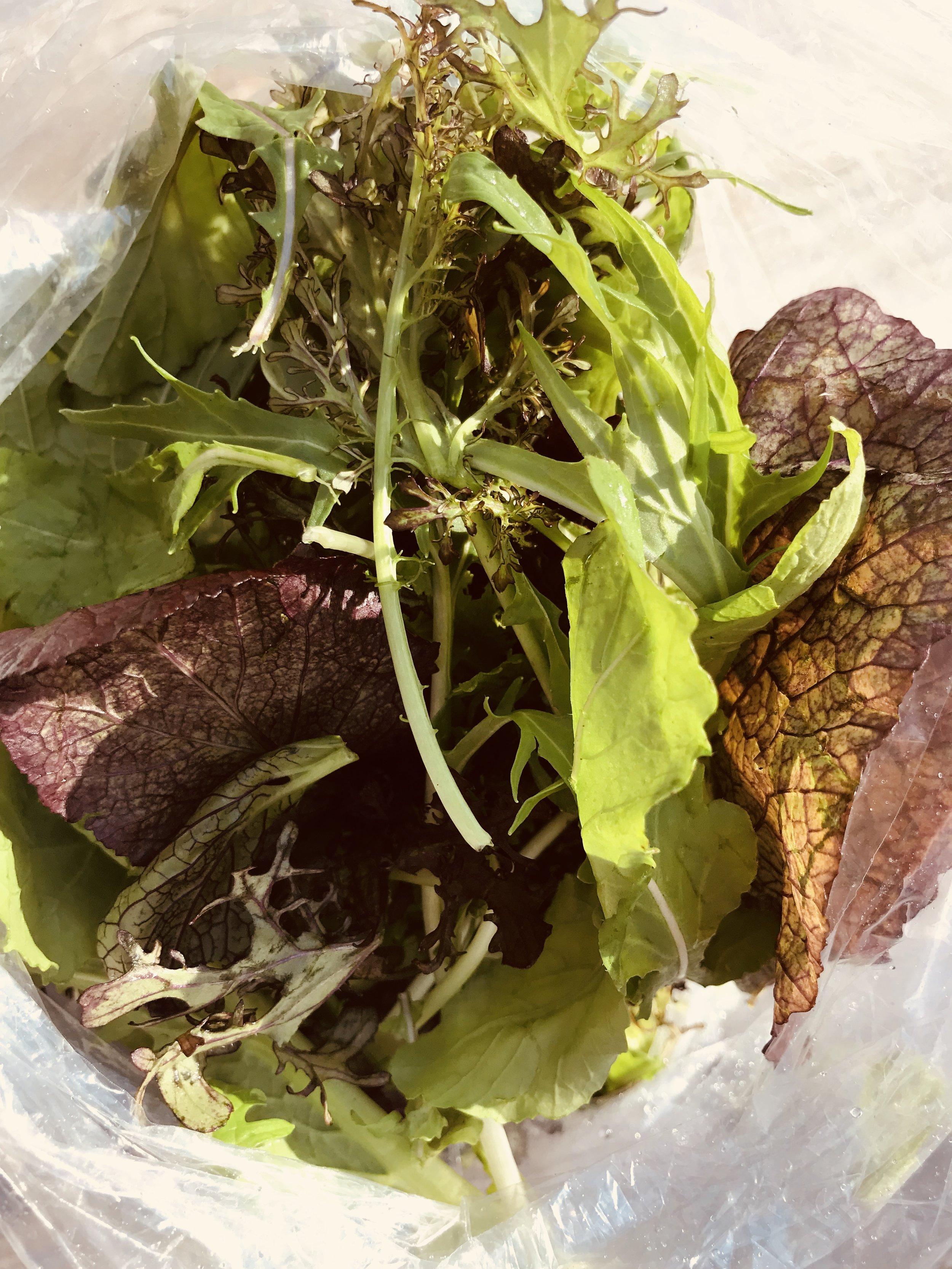 Salad Greens  / Stone Hollow Farmstead